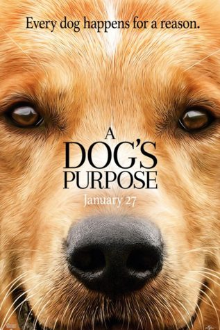 'Dog's Purpose' movie brings viewers to tears