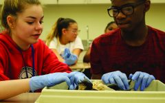 Students dive deeper into their learning with dissections
