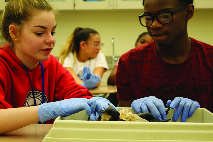 With a mixed emotion of excitement and disgust, Sophia Moorhead, seventh grade theater major, and Keon Allen, band major, dissect a bullfrog. During the dissection seventh graders learned background information on the frogs and got to dissect learning all the different parts of the frog.